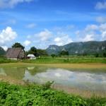 Rice paddies in Vinales
